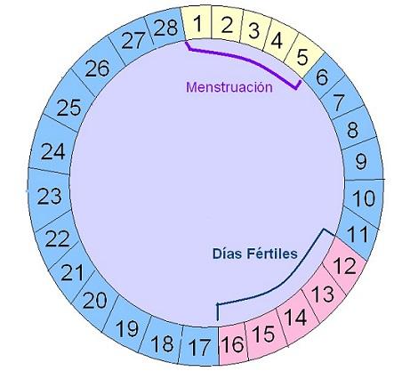 calendario ovulacion días fértiles